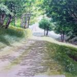 chemin ombragé 4